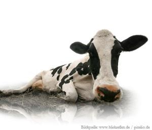 Decotier-kuh-titelbild